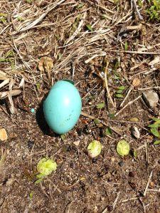 Robin Egg Cracked